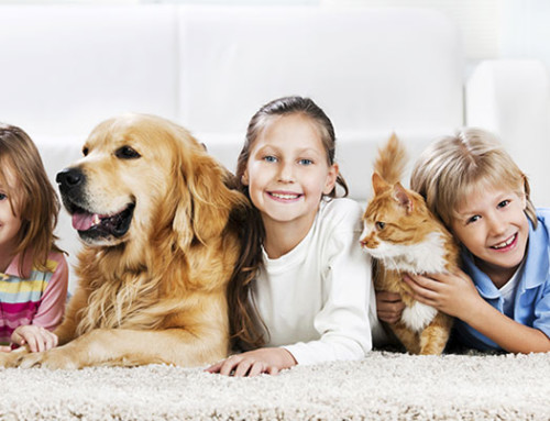 How To Clean Pet Stains & Remove Odors From Carpet